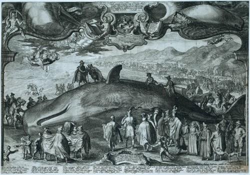 Walvis Wijk aan Zee